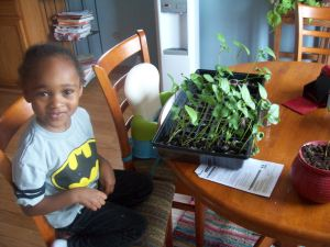 My niece helped me pot the 2nd batch of seedlings