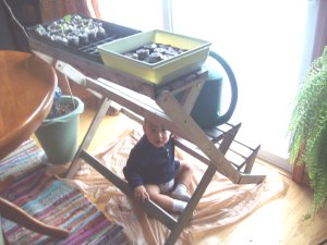 1 week old seedlings in my kitchen. Baby nephew is loving the new hiding place