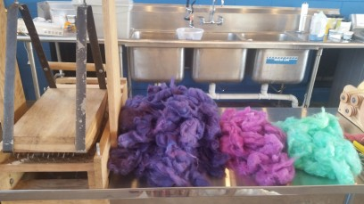 preparing to blend Cotswold 2nds with a wool picker at 3 Mooms Fiberworks